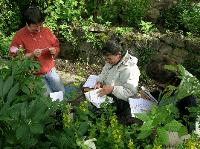 Leçons de botanique